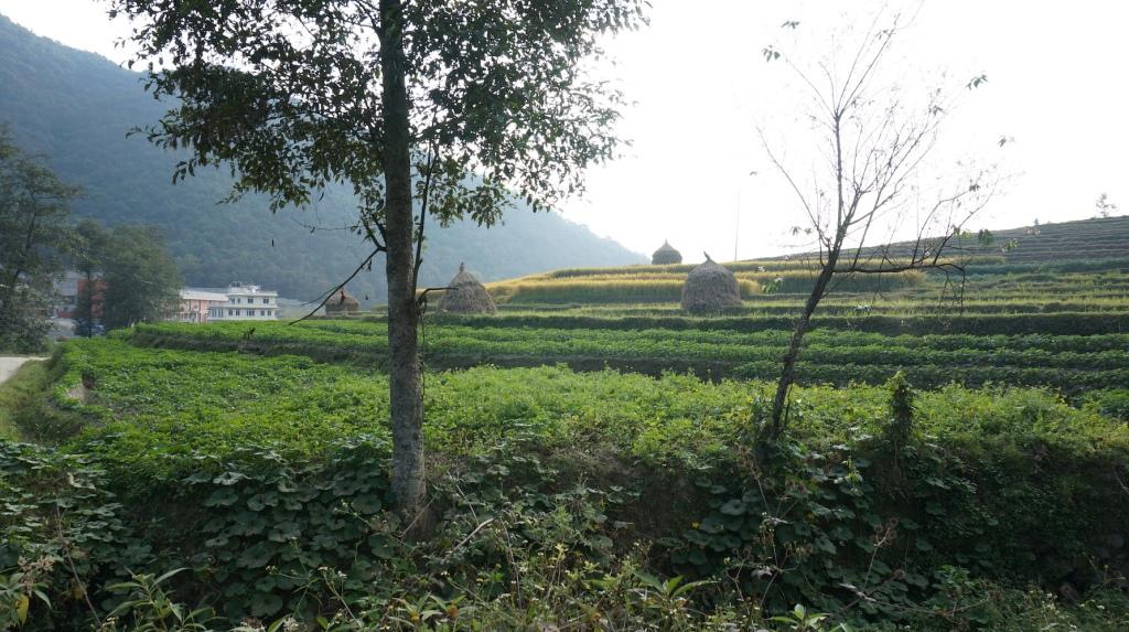 Farmland on the hike from Nagarkot to Dhulikhel